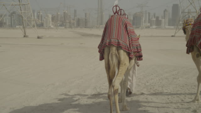 men lead camels towards dubai city, uae - famous place stock videos & royalty-free footage