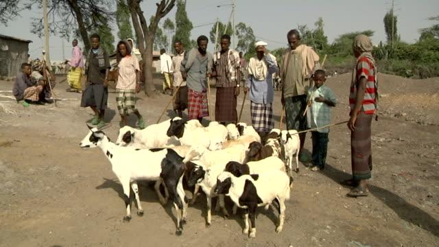 men leading goats at camel fair - アフリカの角点の映像素材/bロール