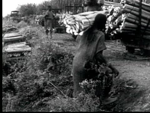 men load bundles of sisal leaves onto railroad cars. loaded train goes over trestle bridge + pulls into yard / audio - 材木置き場点の映像素材/bロール