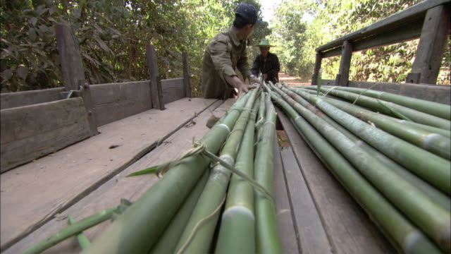 stockvideo's en b-roll-footage met ms men loading bamboo into truck , cambodia - bamboo plant