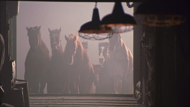 Men move a herd of horses into a stable.