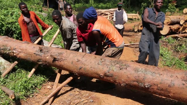 men moving a log by hand on the zomba plateau in malawi, a land that has been heavily deforested to supply timber for making charcoal. - barefoot stock videos & royalty-free footage