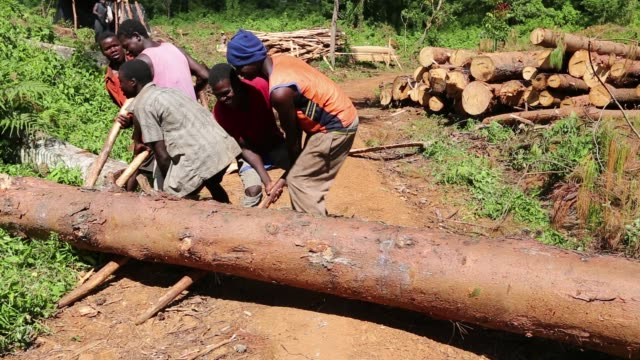 men moving a log by hand on the zomba plateau in malawi, a land that has been heavily deforested to supply timber for making charcoal. - timber stock videos & royalty-free footage
