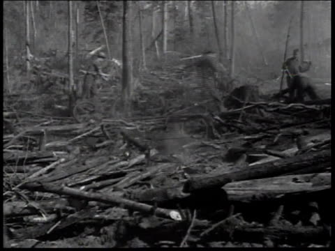 1936 montage men of the civilian conservation corps chopping down trees trying to halt forest fire / united states - civilian conservation corps stock-videos und b-roll-filmmaterial
