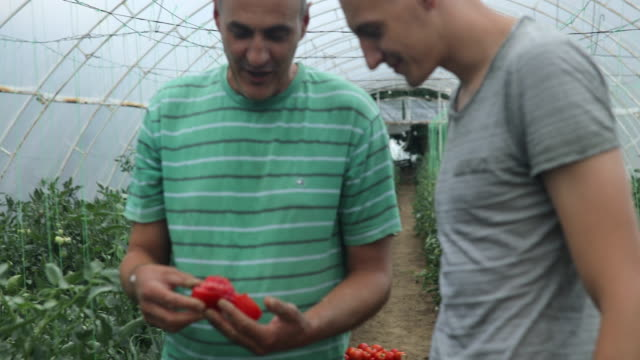 men on farm - local produce stock videos & royalty-free footage