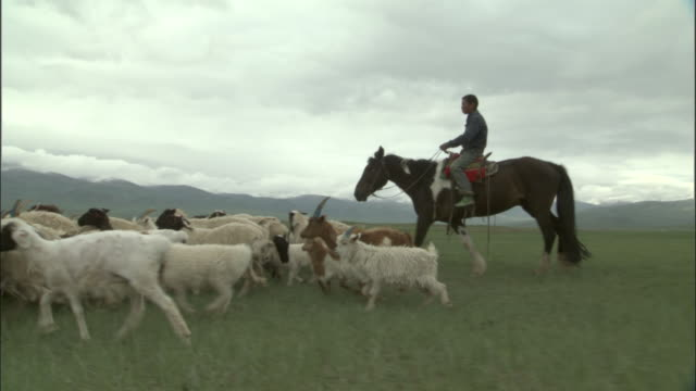 Men on horseback drive sheep over plains, Bayanbulak grasslands