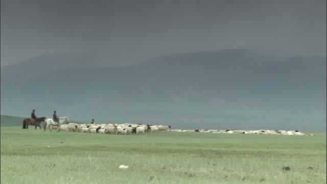 vidéos et rushes de men on horseback herd sheep across grasslands, bayanbulak grasslands - mener un troupeau