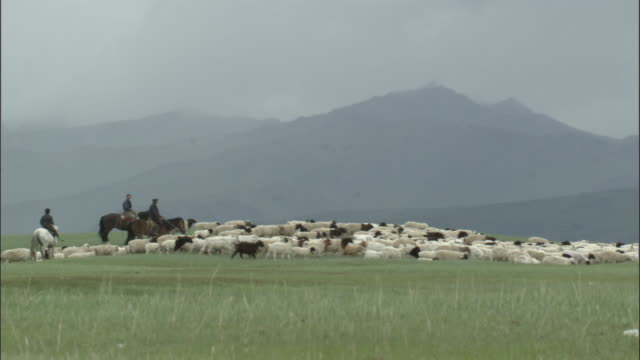 vídeos y material grabado en eventos de stock de men on horseback herd sheep across grasslands, bayanbulak grasslands - oveja merina