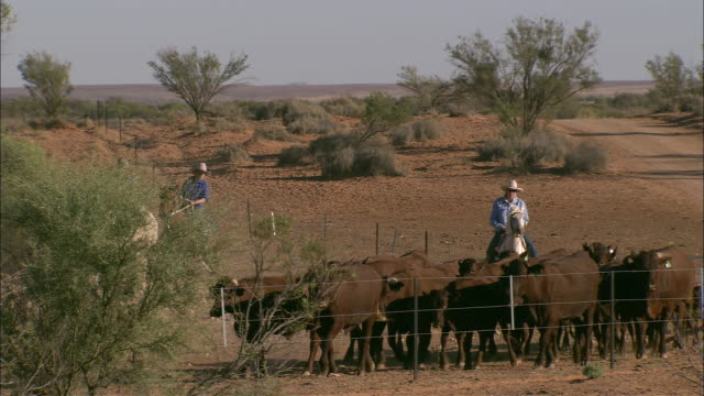 ws pan men on horses herding cattle on ranch, anna creek station, south australia, australia - hat stock videos and b-roll footage