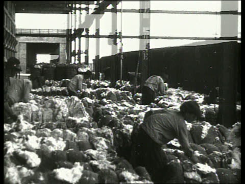 b/w men packing bales of cotton in warehouse / no sound - anno 1910 video stock e b–roll