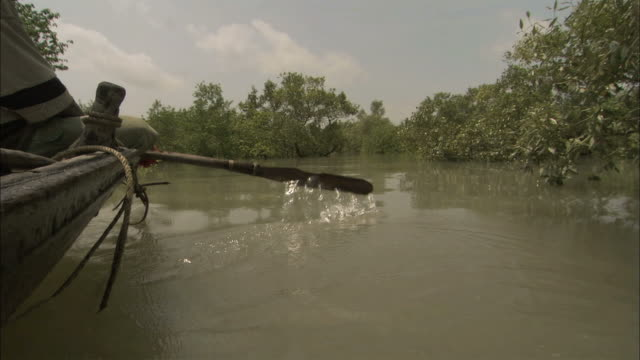 MS Men paddling at small boat on wide river / Sunderbans, Bangladesh