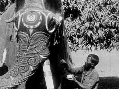 1934 b/w montage ms pan ws cu men painting ornate patterns on heads and trunks of elephants in preparation for a durbar ceremony, covering elephants with gold blankets and ornate head coverings / india - 1934 stock-videos und b-roll-filmmaterial
