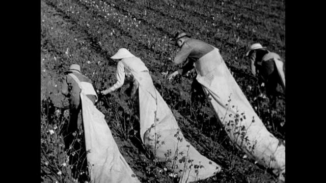 / men picking cotton by hand / woman tips bag of cotton on front porch next to older baby / long bags for cotton draped around the working... - sharecropper stock videos & royalty-free footage