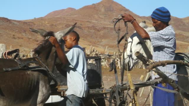 ms men placing saddles on mule / bergsig, kunene, namibia - wiese点の映像素材/bロール