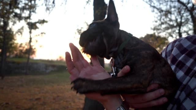 stockvideo's en b-roll-footage met mannen spelen met franse bulldog - men