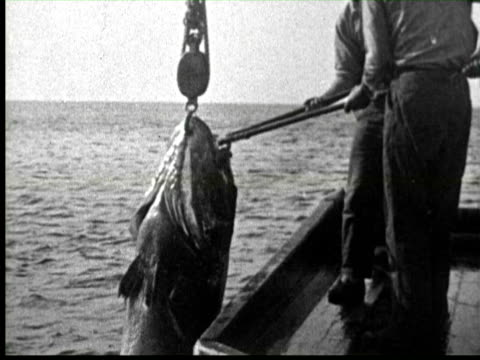 b/w men pulling big fish in boat by crane, united states / audio - anno 1920 video stock e b–roll