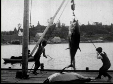 vidéos et rushes de b/w men pulling big fish in boat by crane, united states / audio - de grande taille