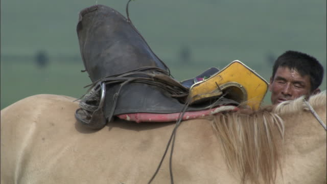 men put saddle on back of unwilling horse, inner mongolia, china - sattel stock-videos und b-roll-filmmaterial