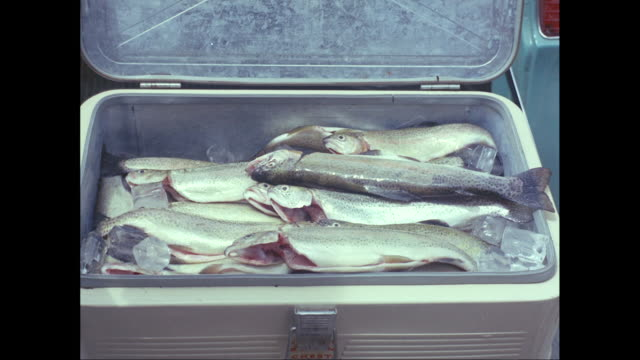 cu men putting fish in ice box / united states - cooler container stock videos and b-roll footage