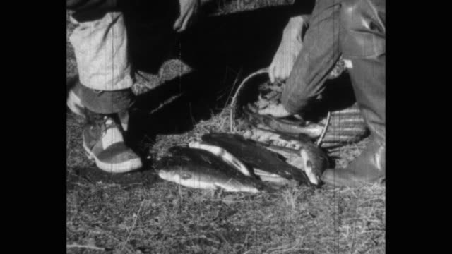 cu men removing fish from wicker basket - low section stock videos & royalty-free footage