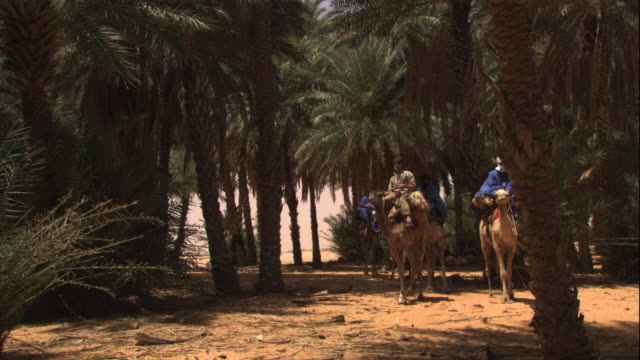 men ride camels between palm trees in the desert. - モーリタニア点の映像素材/bロール