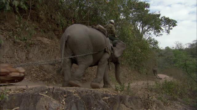ws la men riding atop elephants hauling logs along dirt road, thailand - chain stock videos & royalty-free footage