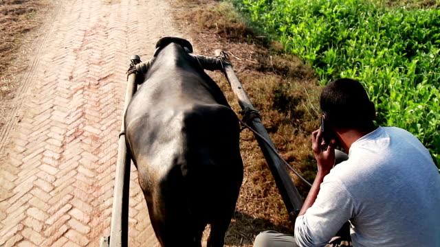 Männer Reiten Büffel Einkaufswagen im Feld &  sprechen auf Mobiltelefon