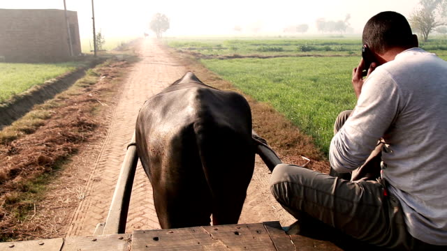 vídeos de stock, filmes e b-roll de homens andando búfalo carrinho para o campo &  falando no celular - herding