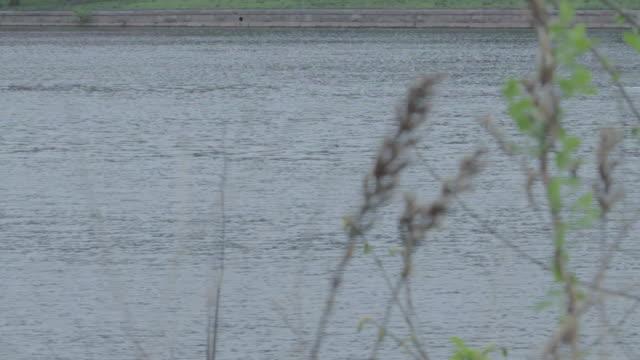 ws men rowing along river in rowboat / philadelphia, pennsylvania, united states - 2000 2010 stil bildbanksvideor och videomaterial från bakom kulisserna