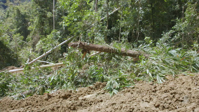 ms pan men securing and tractor dragging away felled rainforest tree / tawau, sabah, malaysia - forestry industry stock videos & royalty-free footage