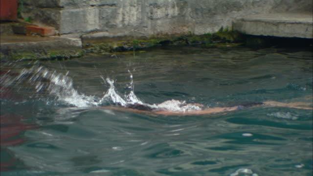 vídeos de stock e filmes b-roll de ms pan men swimming in outdoor public swimming pool, jinan, shandong, china - só homens maduros