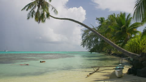 men swimming in tahiti lagoon near outrigger under palm tree / moorea, french polynesia - french polynesia stock videos & royalty-free footage