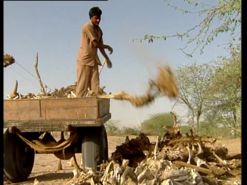 men unload dry carcasses of livestock during drought. - livestock stock videos & royalty-free footage