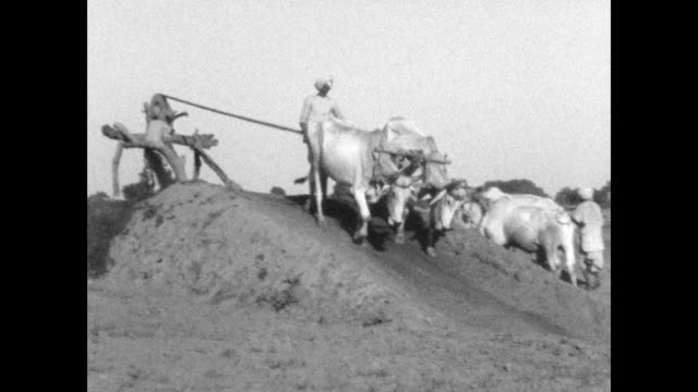 men using oxen to pull water out of a well from the home movies of austen havelock layard who served in the indian civil service during the 1930s and... - 働く動物点の映像素材/bロール