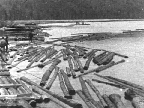vidéos et rushes de b/w 1906 men walking by logs floating on river / maine - bûcheron
