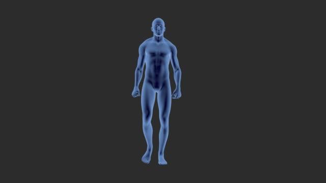Mannen wandelen, voor medicinale animatie.