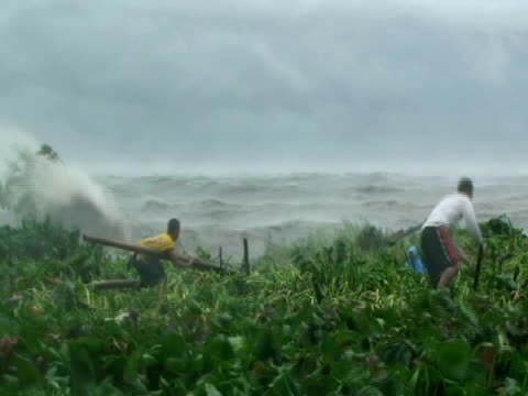 men walking on floating vegetation in storm waves, retrieving belongings during typhoon mirinae, cupang, philippines, 2009 - natural disaster stock videos & royalty-free footage