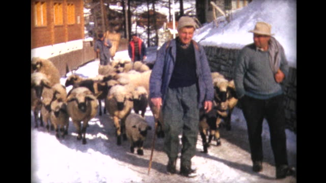1963 men walking their sheep up a snowy path - land stock-videos und b-roll-filmmaterial