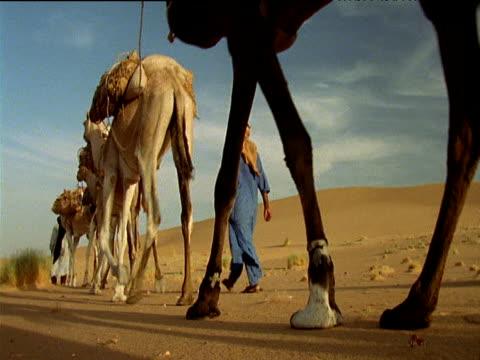 vídeos de stock e filmes b-roll de men wearing robes walk alongside camel train sahara desert - enfeites para a cabeça