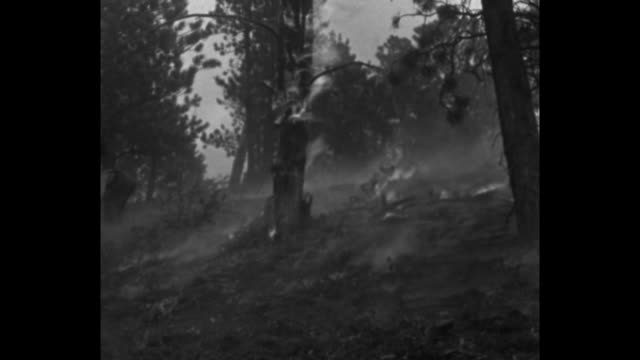 men with backpacks run up steep hill to blaze and dig fire lines with one shoveling dirt at base of burning tree / they run downhill and assist... - one tree hill stock videos and b-roll footage