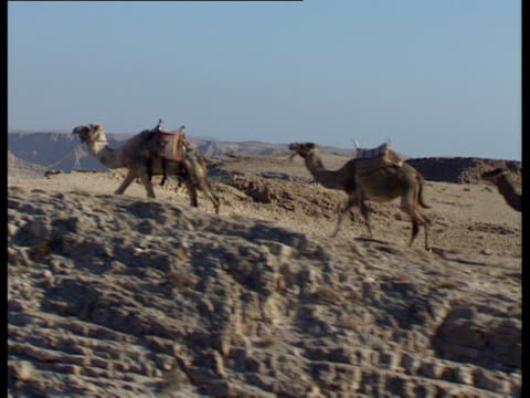 vidéos et rushes de aerial ws men with camels walking across judea desert, israel - quatre animaux