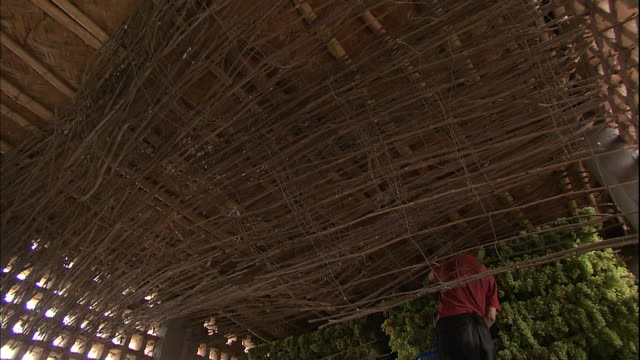 stockvideo's en b-roll-footage met men work to hang grapes on branches near the ceiling in a raisin house silk road china - rozijn