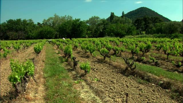 stockvideo's en b-roll-footage met ws men working in vineyard / provence, france - men