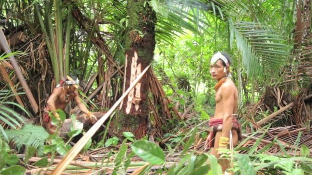 Mentawai people gathering Sago wood