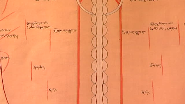 men-tsee-khang, dharamsala. a backbone chart hanging on a wall at a medical museum in dharamsala. - anatomy stock videos & royalty-free footage