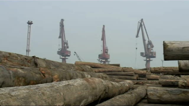 vídeos de stock, filmes e b-roll de merbau wood smuggling from indonesia piles of numbered hardwood logs stacked high at shipyard - smuggling