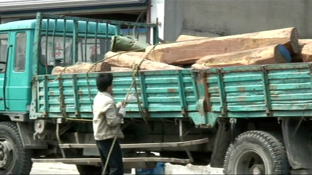 merbau wood smuggling from indonesia shanghai timber market showing piles of wooden planks man securing logs on back of truck stacks of roughsawn... - bauholz stock-videos und b-roll-filmmaterial