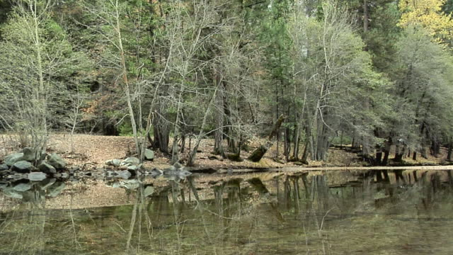ws pan merced river in forest with rocky mountain in background, yosemite national park, california, usa - merced fluss stock-videos und b-roll-filmmaterial