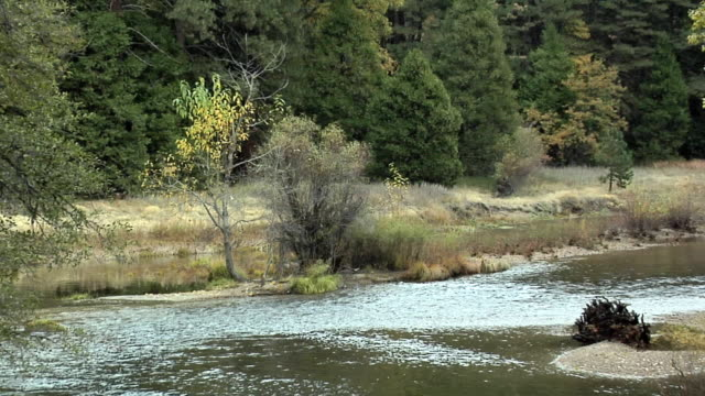 zo ws merced river in forest, yosemite national park, california, usa - merced river stock videos & royalty-free footage