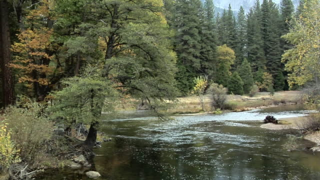 ws pan merced river in forest, yosemite national park, california, usa - merced fluss stock-videos und b-roll-filmmaterial